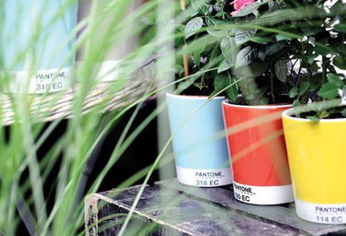pantone planters!!