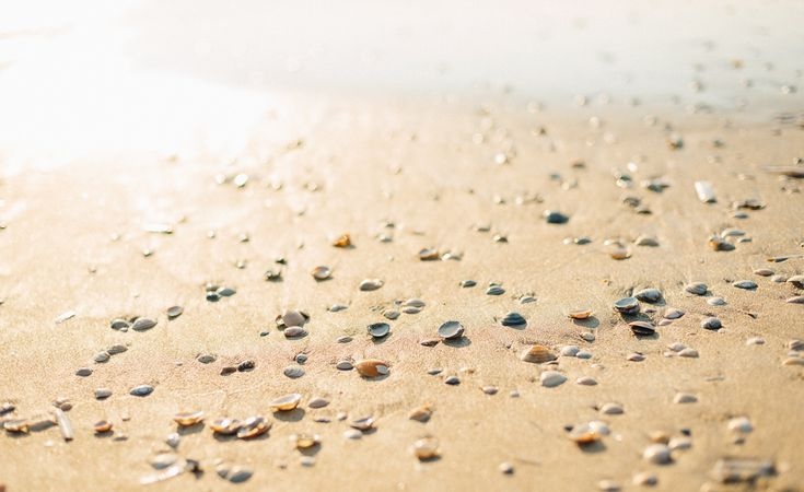 sunshine, sand and shellfish