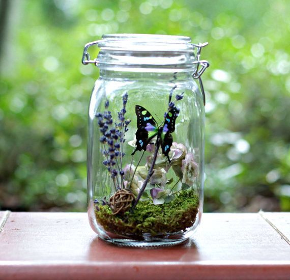 Gift for Her, Eco-Friendly Decor, Butterfly Terrarium Kit in Glass Jar, Purple, Nature Lover, Outdoors, Naturalist, DIYer, Crafts, Woodland