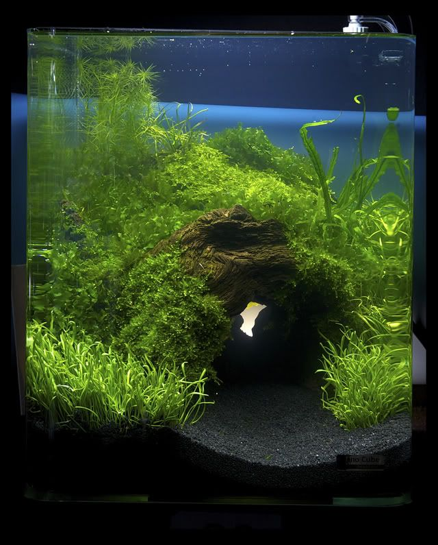 "2011 Germany ""planted tank of art,"" Aquatic Plants Layout Contest results - Marsh House of cylinders"