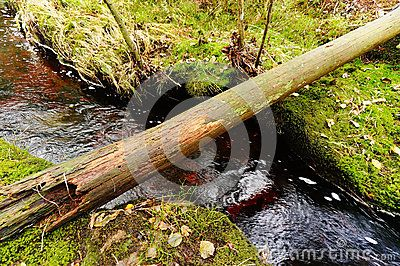 Rotten tree trunk over a flowing stream of green moss in autumn