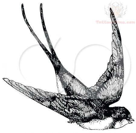 Black And White Swallow Tattoo Design