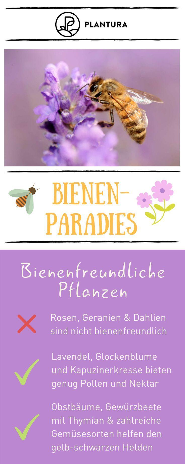 10 Tipps für ein Bienenparadies im eigenen Garten: Bienenfreundliche Pflanzen.B