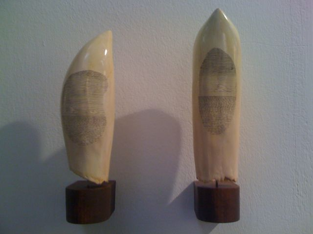 Drawings on 'Whale Teeth' by Kasper Pincis at the Dalla Rosa Gallery stand http://dallarosagallery.com/ #2014