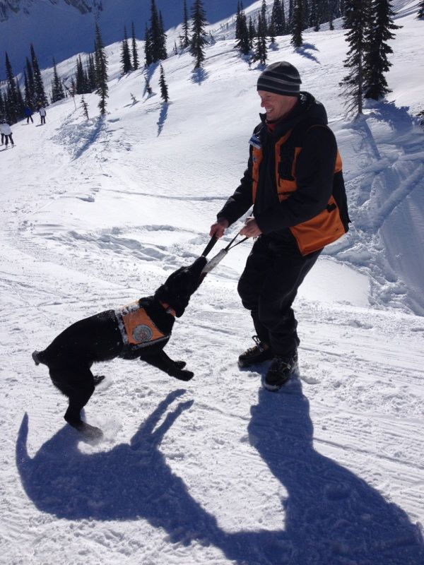 One of our avalanche rescue dogs Nico having a little fun with his trainer this winter.