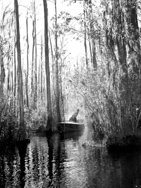 Florida Memory - Boating in the Okefenokee Swamp - Osceola County, Florida