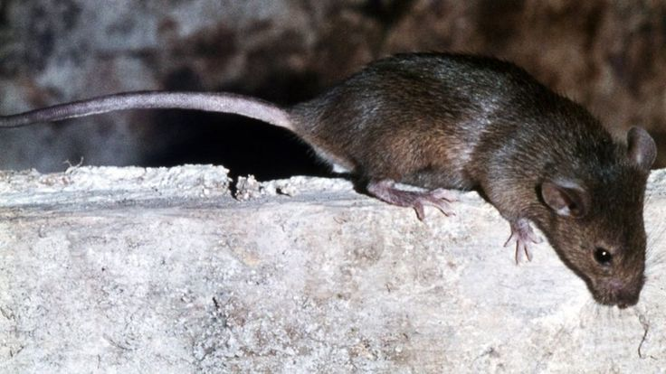 Paraplegic French girl attacked by rats while sleeping http://ift.tt/2vKb1KF
