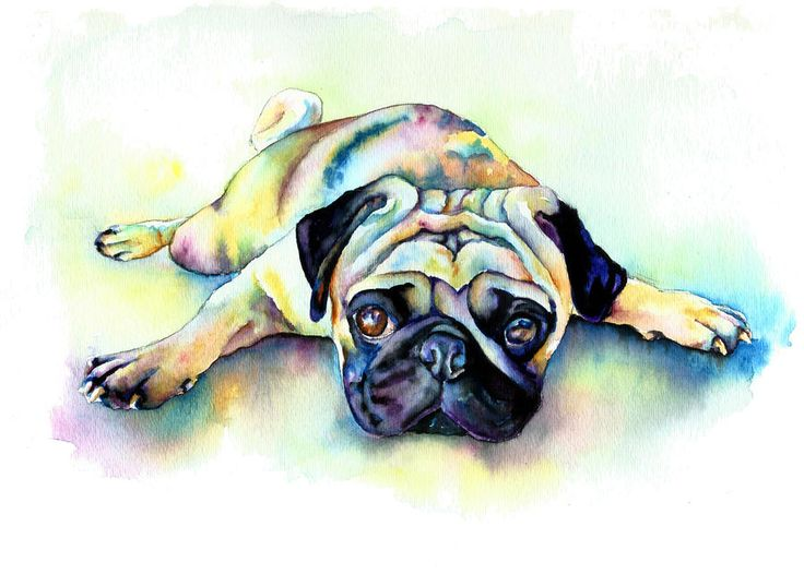 Pug Laying Flat Painting by Christy Freeman Pug Laying