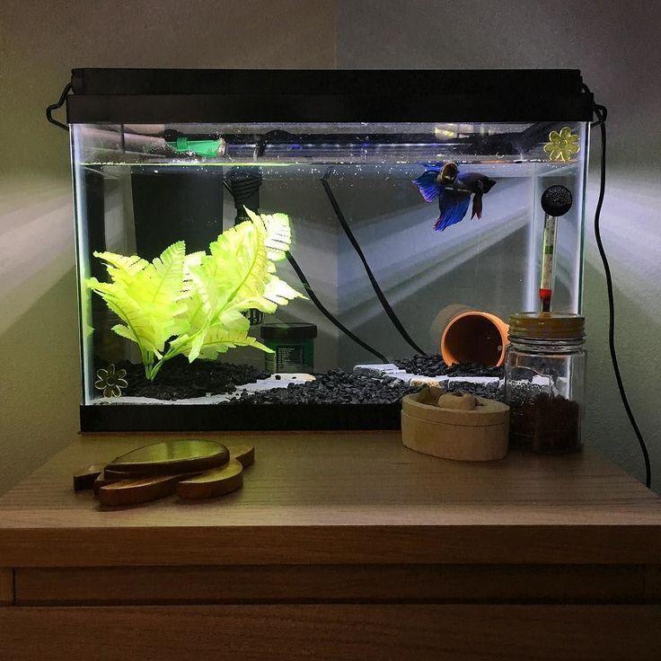 A nice example of a betta aquarium! Ticks all the boxes :) #bettaaquarium #bettatank #betta #bettafish #bettaboxx