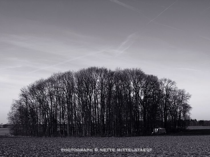Unity of the Trees on @500px #500px #photography #pinterest