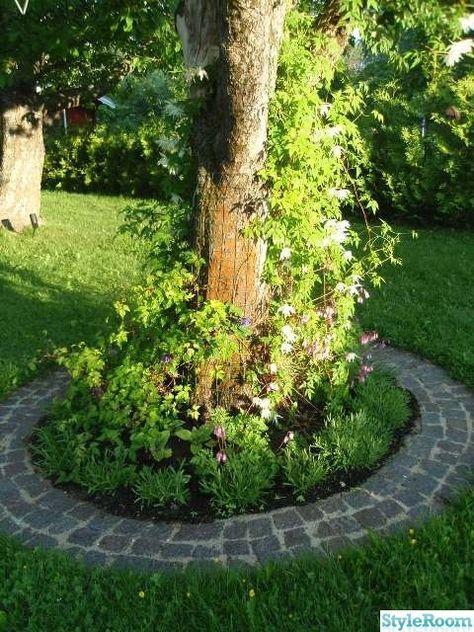 trädgård,lavendel,Äppelträd,gatsten,fänrikshjärta