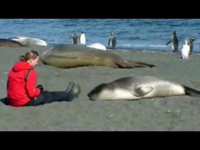 This has always been my favorite critter video! Enjoy! :) -- How to Cuddle With an Elephant Seal
