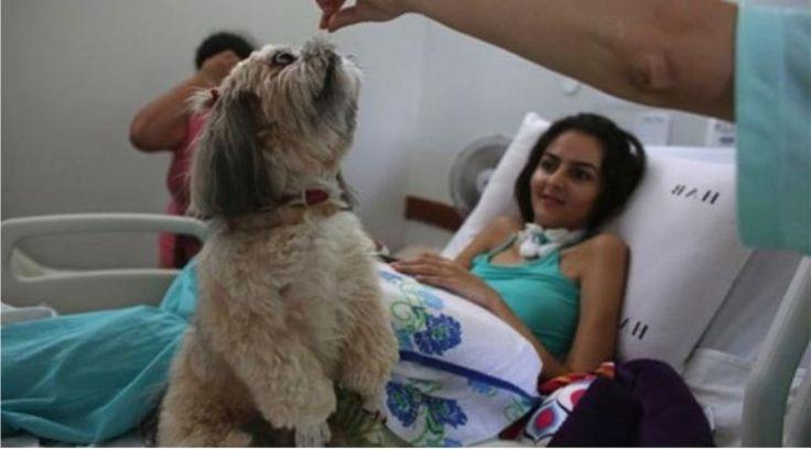 Anjing Peliharaan Dapat Membantu Pemulihan Pasien Kanker.