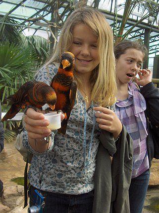 A la rencontre des oiseaux tropicaux. Profitez de votre séjour linguistique Safari & Fun en Angleterre pour approcher au plus près de nombreux animaux.