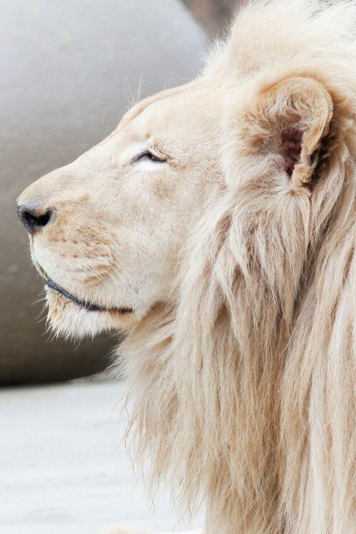 #animals #planet #lifeadvancer - @lifeadvancer