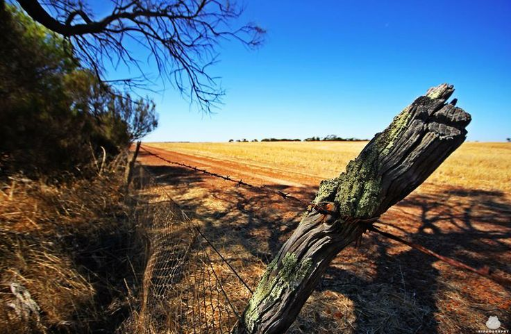 Rabbit Proof Fence, #Corrigin Photo by #Hippography