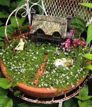 64 best Plants for miniature gardens images on Pinterest Mini