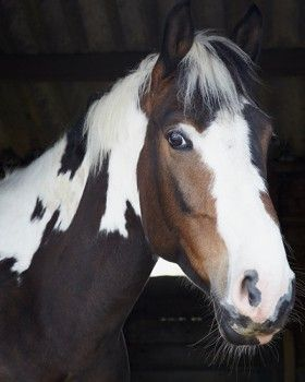 Is #horseriding one of your passions? Do you find it difficult to practice horse riding since you live in #London? Well, #HighBeechRidingSchool is where you should go! We have the same passion that you do about #horses and we take pride in #teaching new #riders as well as giving a good experience to seasoned riders. Contact us for a more than pleasant experience in #horseriding in #NorthLondon!