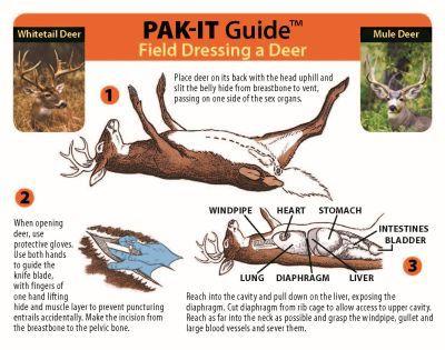 Best 25+ Field Dressing A Deer Ideas On Pinterest | Deer Butchering Deer Hunting And Hunting Tips