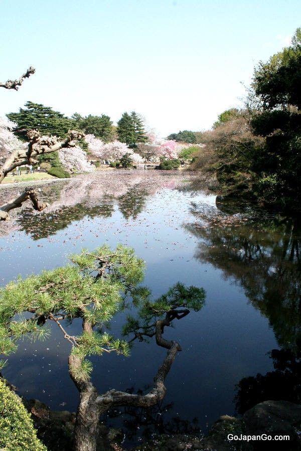 SHINJUKU GYOEN NATIONAL GARDEN in Tokyo http://www.env.go.jp/garden/shinjukugyoen/english/