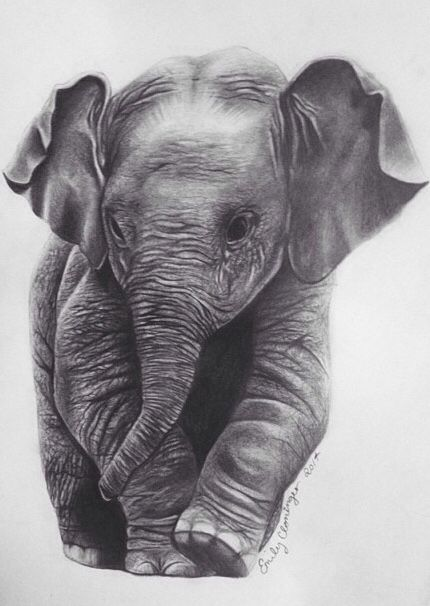 Baby elephant drawing by Emily Cloninger #art #pencildrawing #elephant