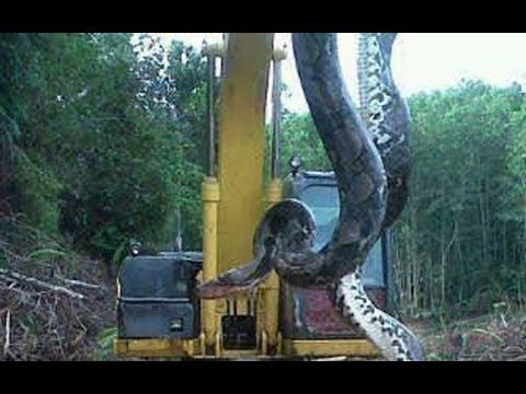 700 Pound Snake Pulled out of Lake in North Carolina