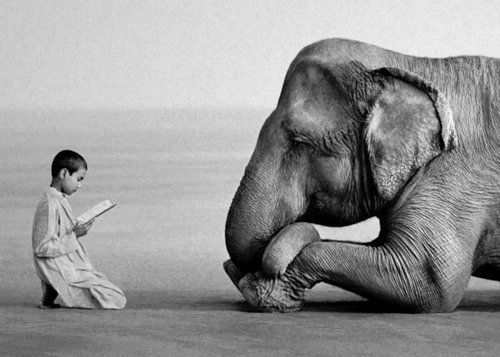 Boy reading the Quran to an elephant who attentively listens.