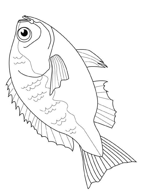 Fish Coloring Pages Bream Fish Coloring Page Cool