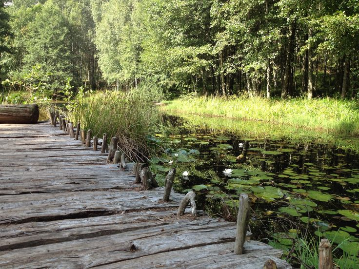 #sjö #näckrosor #sommar #litenbrygga