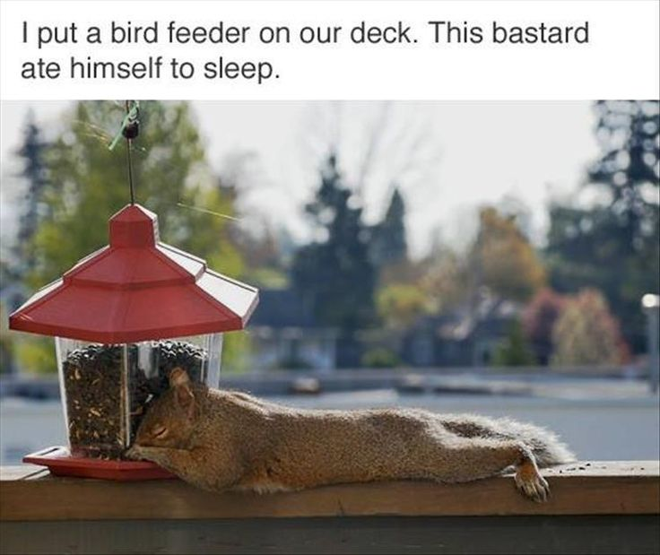 Funny Animal Pictures #7