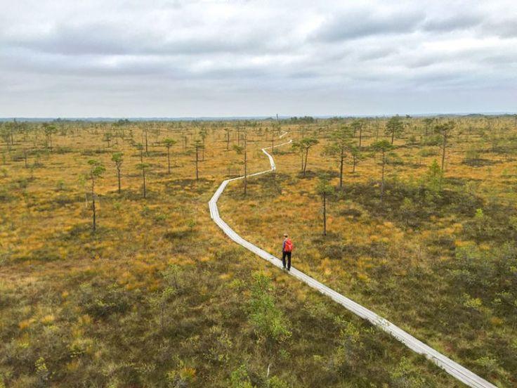 """Wandern in Estland: Warum eine Moorschuhwanderung so viel geiler ist als ich dachte Bei """"Moorschuhwanderung"""" dachte ich bis jetzt immer an: schlammig, matschig, eklig, nass. Ich dachte an Herr der Ringe und wie Frodo auf dem"""