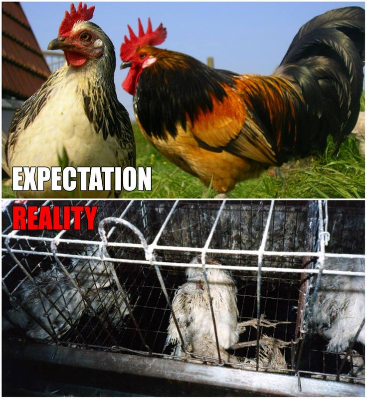 53 Best Spread The Word About Factory Farming Images On