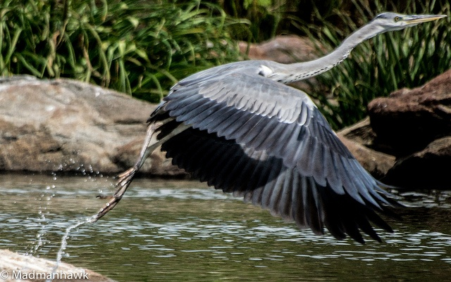 young snake bird 2, via Flickr.