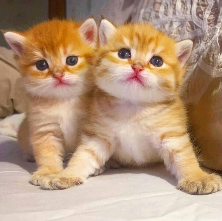 .Adorable Orange Kittens