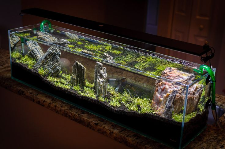 64 best images about inspiring aquariums on pinterest for Fish tank wood