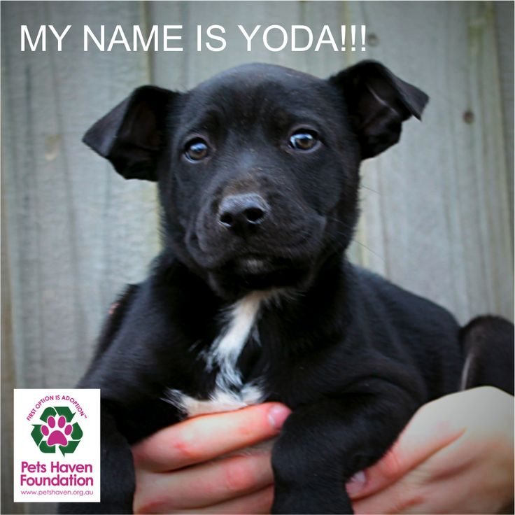MY NAME IS YODA!     Man, does it feel gooooood to have a name! Thanks to everyone who suggested names for me, it was a really hard choice! I think my little brothers & sisters are very jealous, so stay tuned and get your naming caps on again, Love Yoda xx http://ow.ly/i/6c6eu