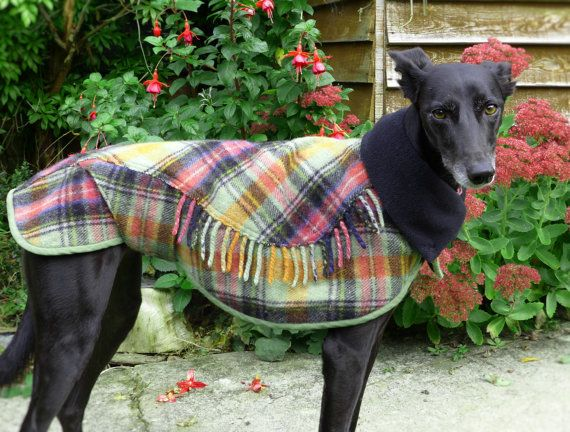 Dog winter coat 100% wool recycled blanket, adjustable snood collar, custom made, polar fleece lined for warmth. For small lurcher/whippet