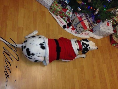 Santa Claus traje para perro, tejidocrochet - YouTube