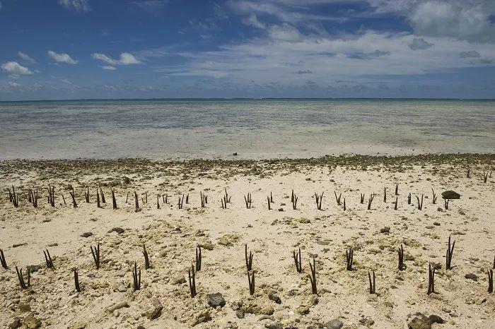Objetivo 13: Acción climática   UNDP