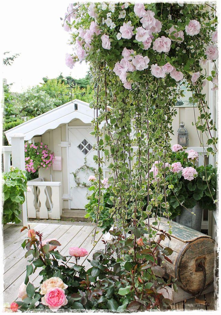 garden with climbing roses