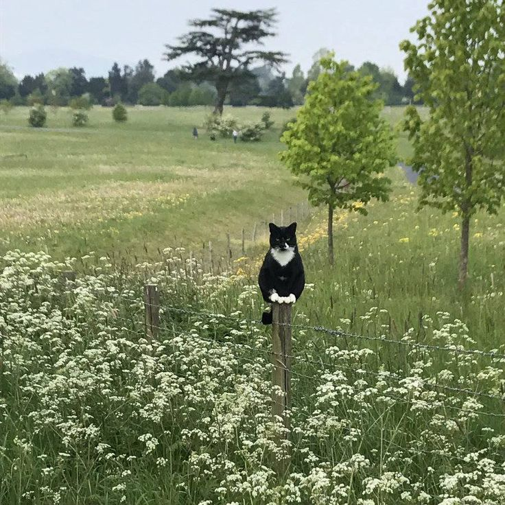 Hardworking kitty on scarecrow duty