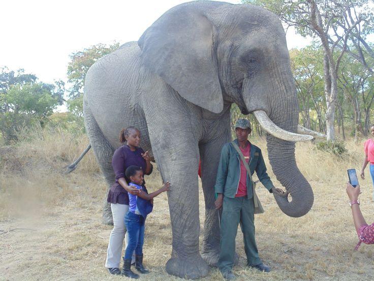 Chengeta Lodge, Zimbabwe
