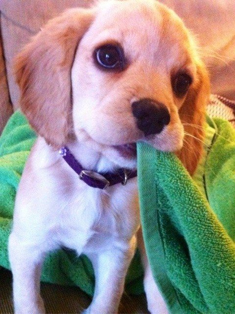 AND WOW, WHAT A GREAT PUPPY. | 25 Adorable Animals To Brighten Your Day