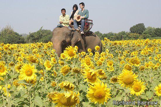 sunflower thai thai sundsvall