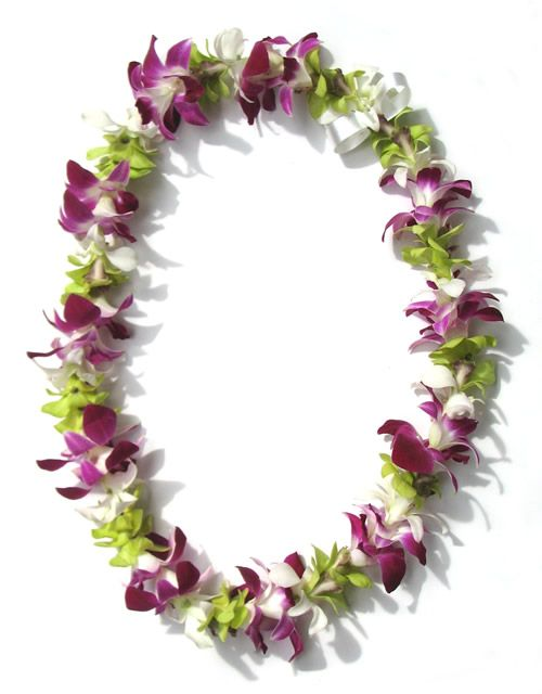 lei flowers   Fresh Hawaiian Orchid Leis & Loose Orchid Blooms
