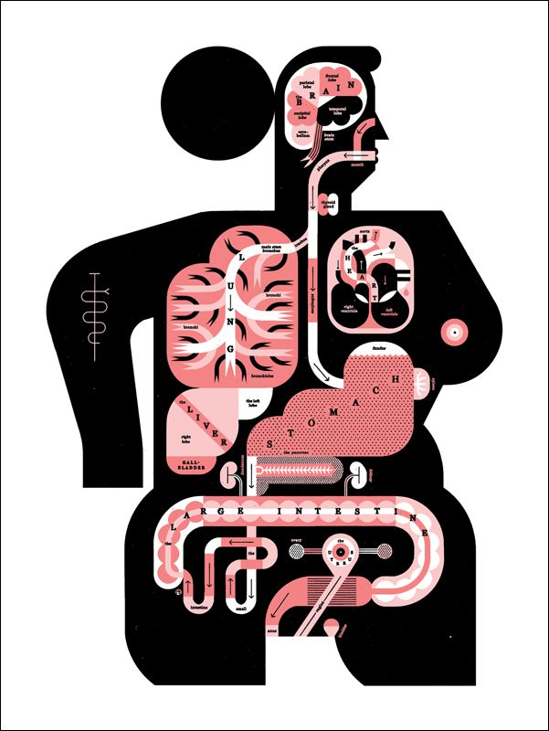 'Male & female anatomy' - Raymond Biesinger Illustration Inc. GREAT portfolio for infographic inspiration.