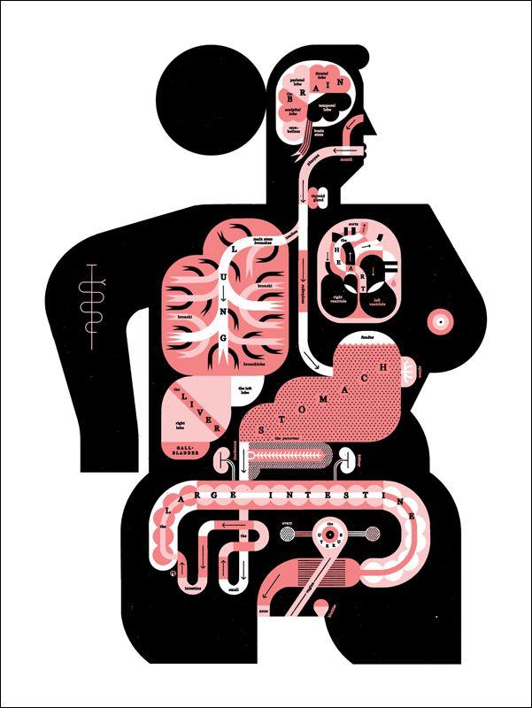 'Male & female anatomy' - Raymond Biesinger Illustration Inc. GREAT portfolio for infographic inspiration.