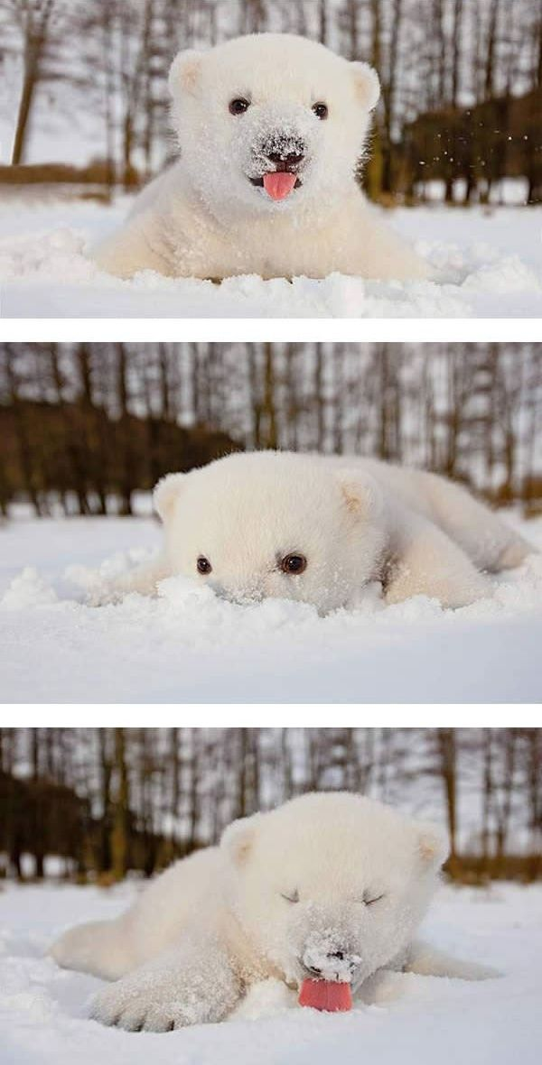 When you do anything with your pet for the first time, it's most probably going to be best laugh you'll have in the whole day. That applies when you take your pet outside to have their first contact with the snow. Reactions can range from them being totally delighted by the soft and cold thing that disappears when they try to lick it to utter resentment.