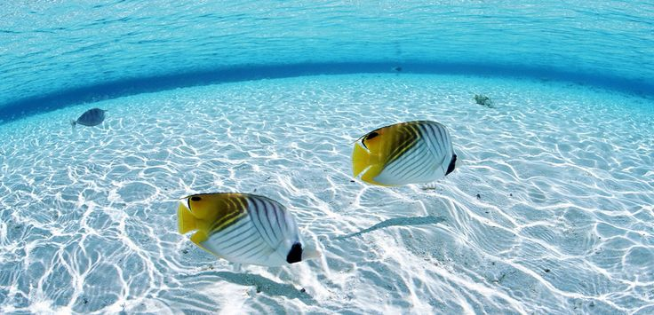 30+ Beautiful Examples of Underwater Photography