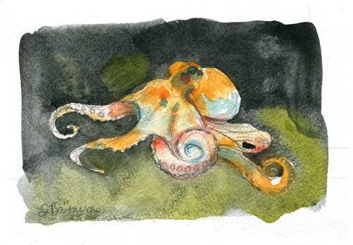 Common Octopus, Cephalopod series- illustration print in multiple sizes